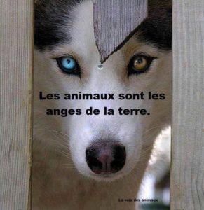 Soins reïki pour les animaux