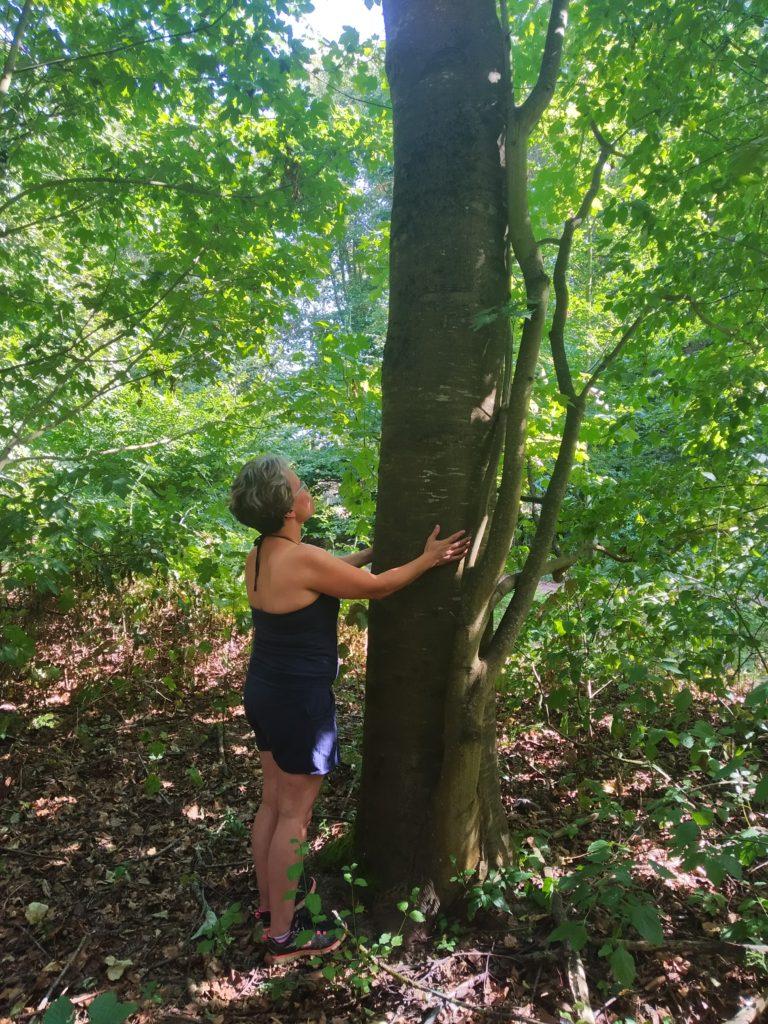 Sylvothérapie - Bain de forêt Ifs