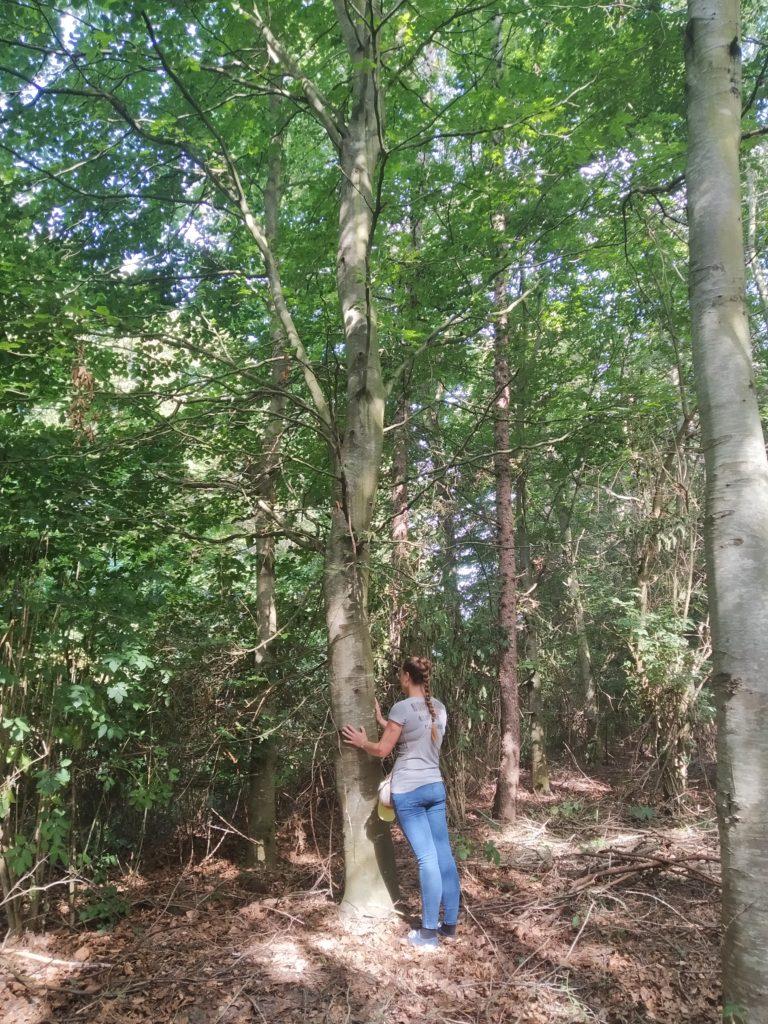 Sylvothérapie - Connexion à l'arbre